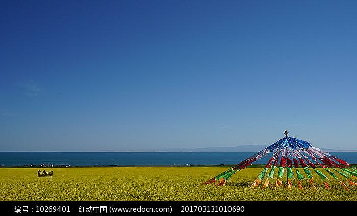 青海湖和油菜花田 图片