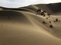 沙漠的生命