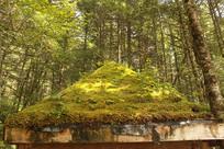 树林和木亭子