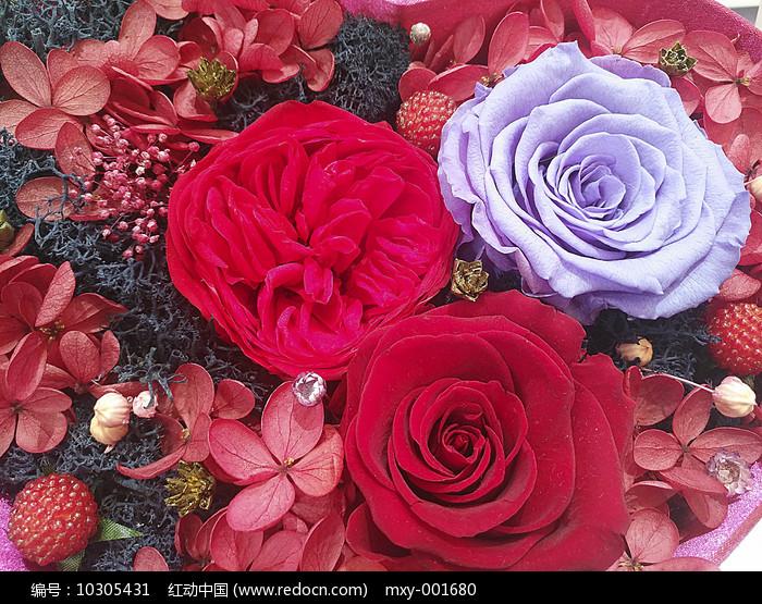 斑斓玫瑰花素材图片