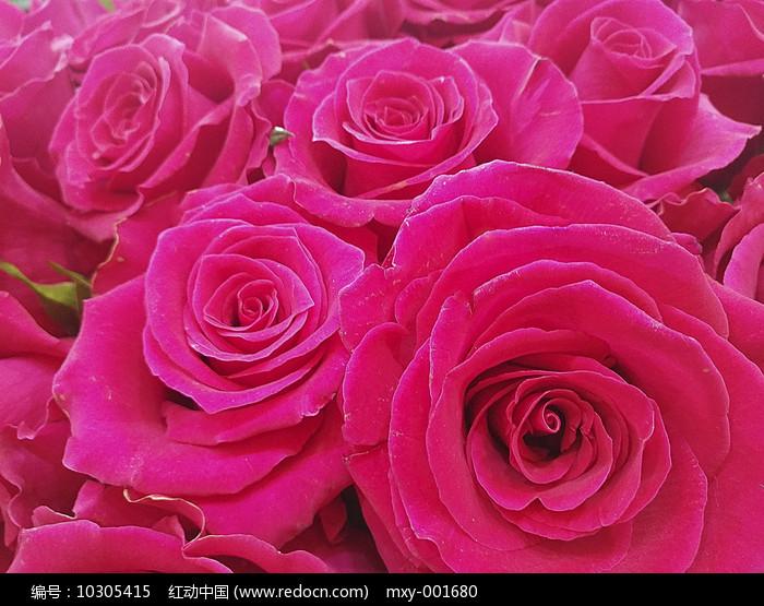 层状玫瑰图片