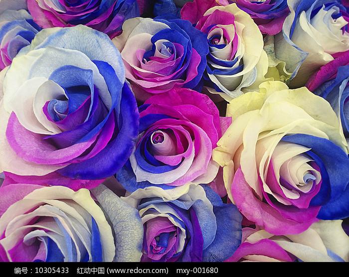 淡雅玫瑰图片