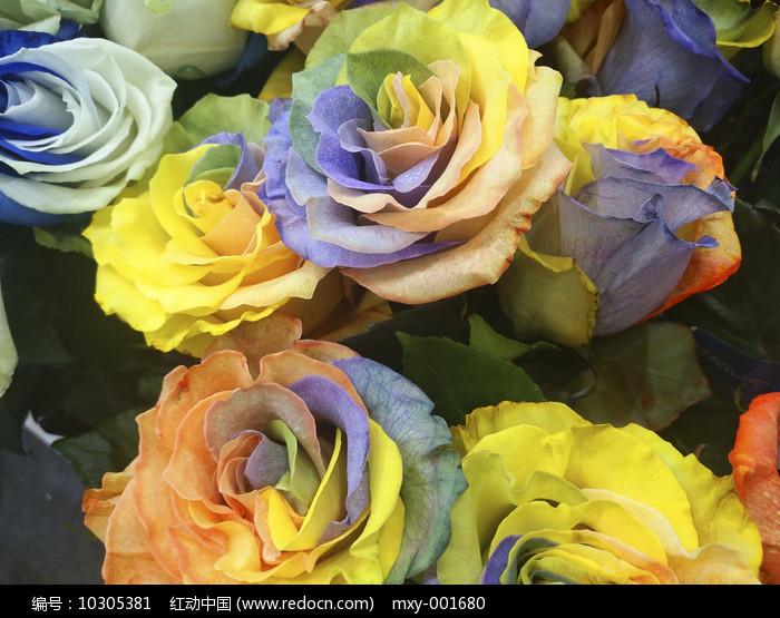 橘黄玫瑰图片