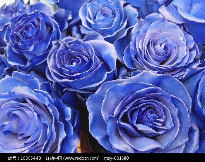幻影玫瑰图片