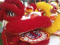 火红狮子头