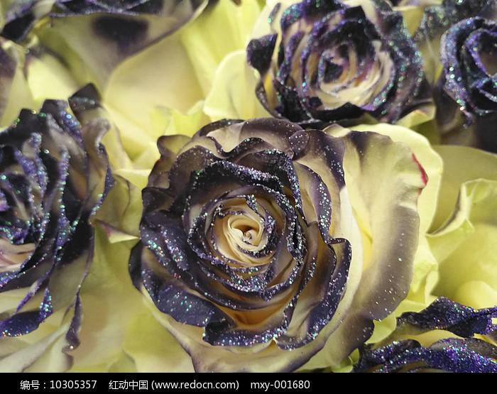 金粉玫瑰图片