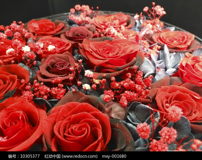 金粉玫瑰图图片