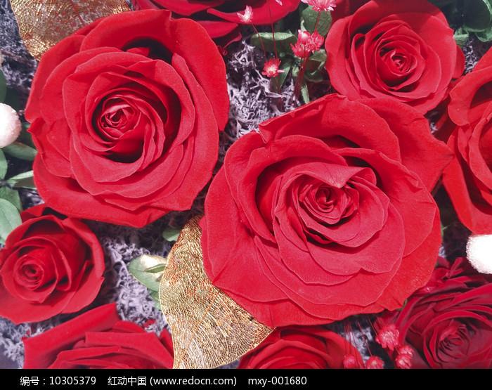 静物红玫瑰图片