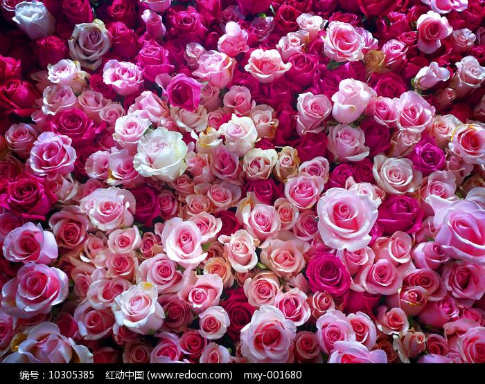 玫瑰花墙素材图片
