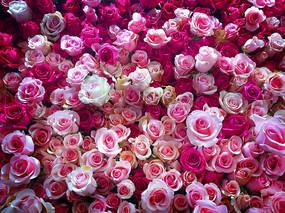 玫瑰花墙素材