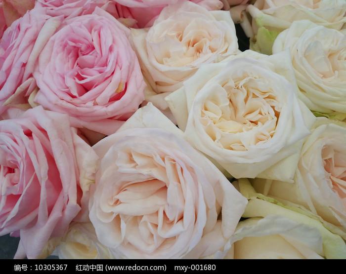玫瑰花束特写图片
