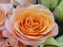玫瑰花特写