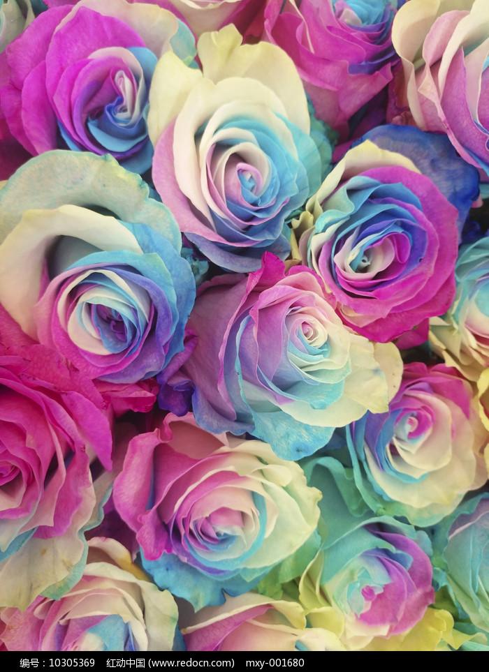 玫瑰花图图片