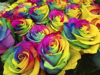 色彩斑斓玫瑰