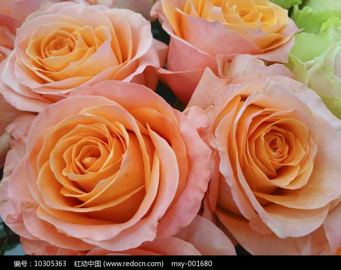 橘色玫瑰图片