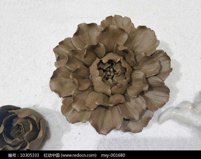 生石花素材图片