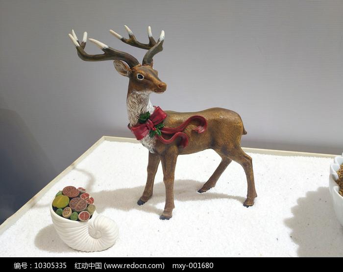 生石花小鹿图片