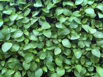 静物光合绿苗