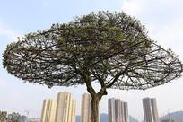 钢筋支撑的伞状大树