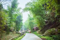 竹林的美景