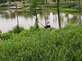 公园池塘钓鱼的人