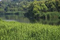 山林河流绿野