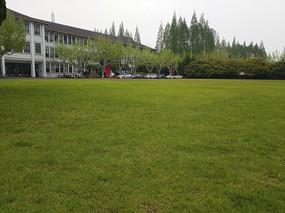 华师大绿草坪