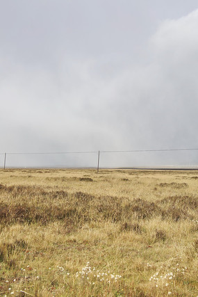 草原上遇见大雾