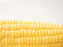 黄色玉米摄影图