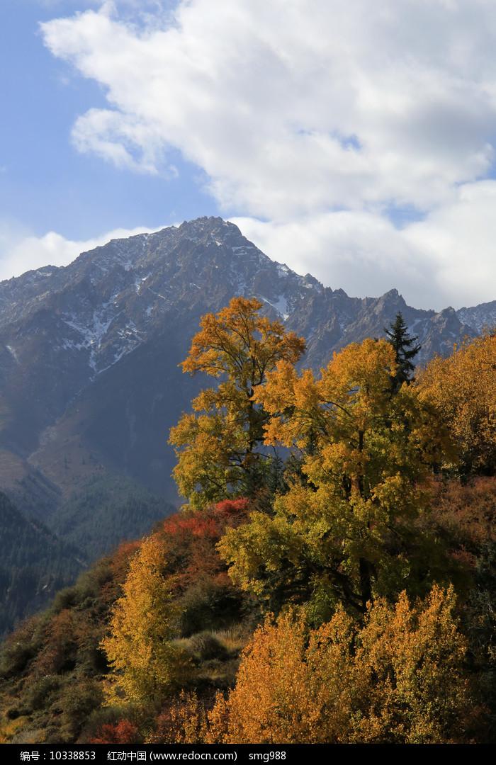 金秋山林图片