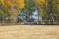 农田林地下的小汽车农田林地下的小汽车