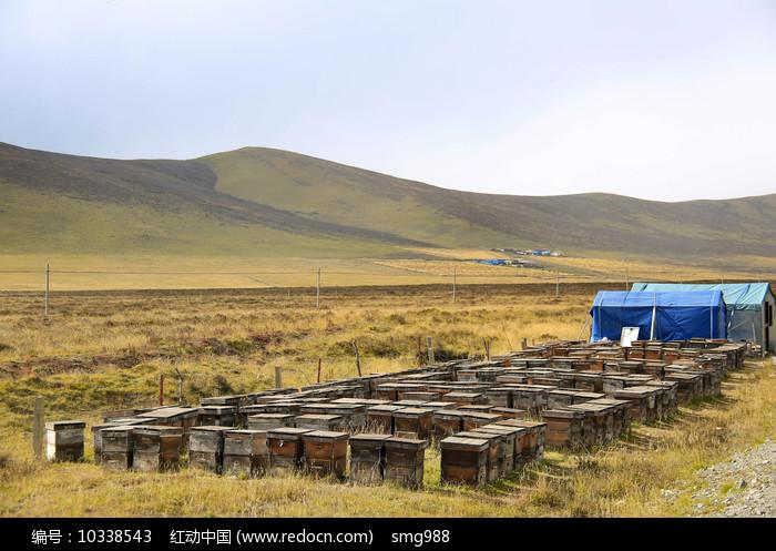 祁连山养蜂蜜图片