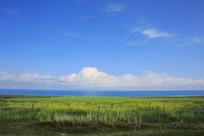 青海湖岸牧场美景