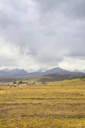 雪山下的草坡秋色