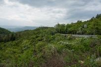 重庆巫山高山森林植被