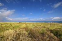 青海湖畔草原