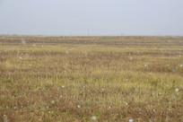 下雪的深秋草原
