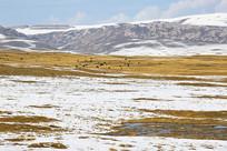 高原牧场雪景