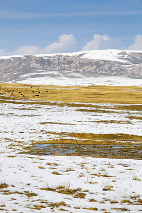 祁连山雪山牧场
