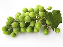 绿叶青葡萄