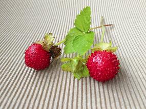 鲜果野草莓