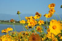 昆明池旁的花