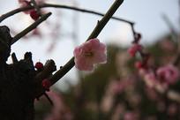 树枝上的一朵花