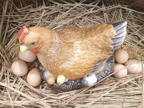 假母鸡抱窝