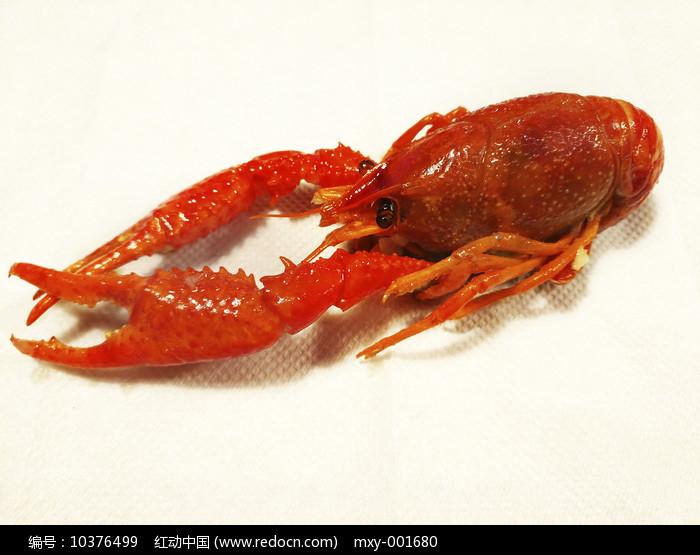 白底小龙虾美食图片