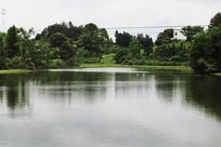 池塘水特写