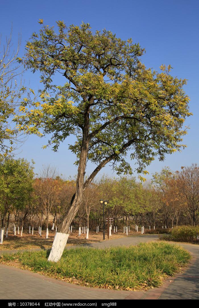 公园大树公园大树图片