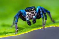 百微拍摄昆虫