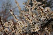 春天的花海