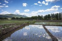 东北水稻种植